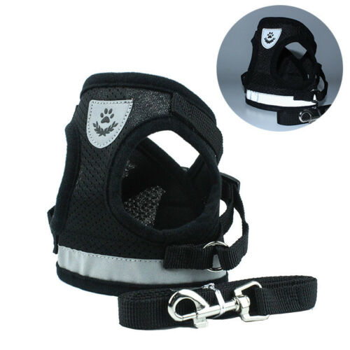 Black Dog Harness