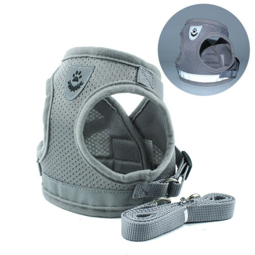 Grey Dog Harness